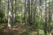 Δάσος Σκιρίτιδας, Αρκαδία