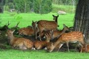 Εκπαιδευτικό Πάρκο «Μεγάλος Λόφος», Κοζάνη