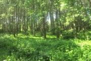 Χίλια Δέντρα, Κιλκίς