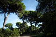 Δάσος Στροφυλιάς, Αχαΐα